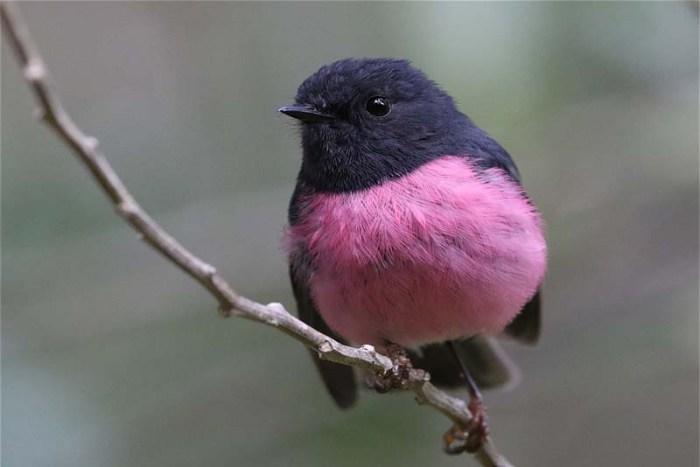 pink-robbin-pink-animals