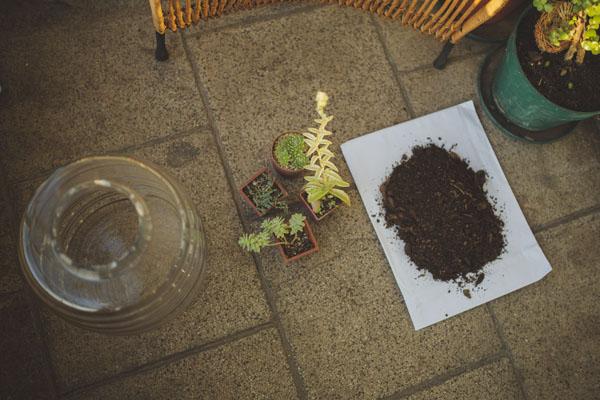 C mo se hace un terrario depto51 blog for Jardines con maicillo