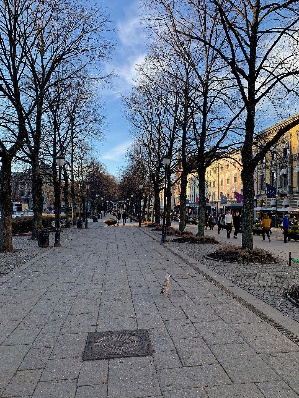 Calle Karl Johans