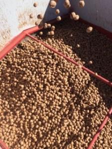 bin of walnuts
