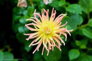 flowerdome-78