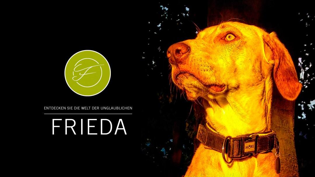 Startbild Frieda