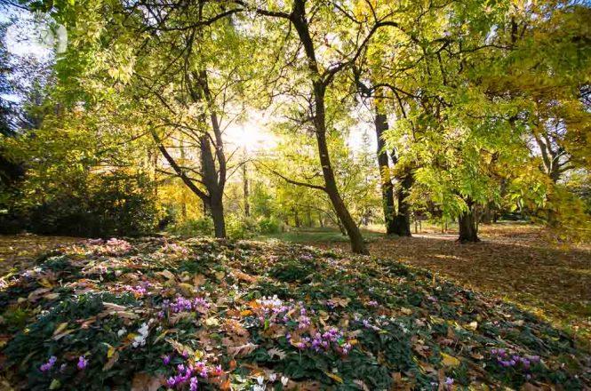 Der Inselfotograf - Greifswald - Arboretum