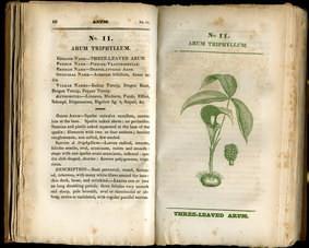 Tıbbi Bitkiler ve Sağlığımız