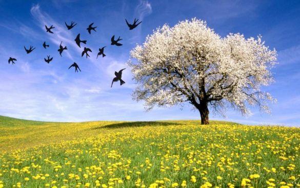 İlkbahar Ekinoksu