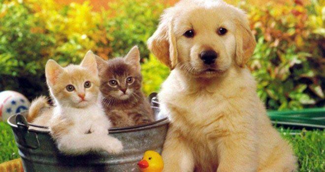 Kedi Köpek Tüyü Kist Yapar mı?