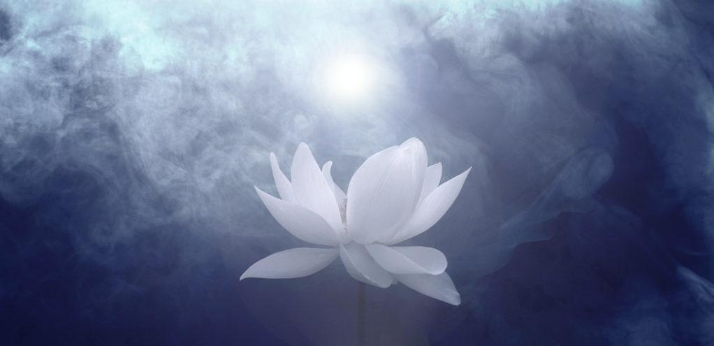 Beyaz Lotus Yolu Üzerine…
