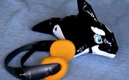 Ein Delfin kann gut hören.