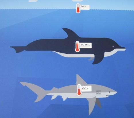 Unterschiedliche Temperatur (Informationstafel im Aquarium Genua)