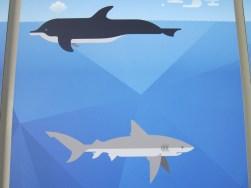 Unterschiede bei der Atmung (Informationstafel im Aquarium Genua)