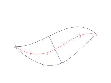 2. Schritt: Der Umriss des Delfins (Zeichnung: Rüdiger Hengl)
