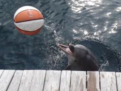 Nami spielt gerne Ball. (Foto: Oliver Schmid)