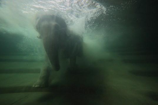 Badender Elefant (Foto: Rüdiger Hengl)