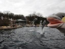 FINN in der Delfin-Lagune in Nürnberg (Foto: Rüdiger Hengl)