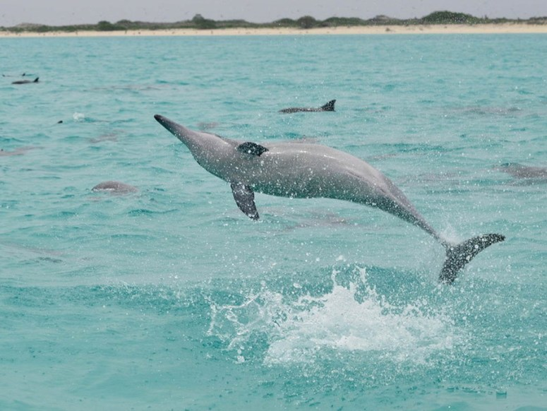 Spinnerdelfin (Foto: Brigitte Fugger)