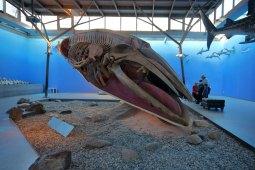 "Ausstellung ""RIESIG im Meer"" (Foto: Rüdiger Hengl)"