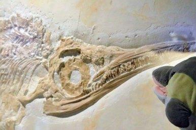 FINN mit einem Ichthyrosaurier (Foto: Rüdiger Hengl)