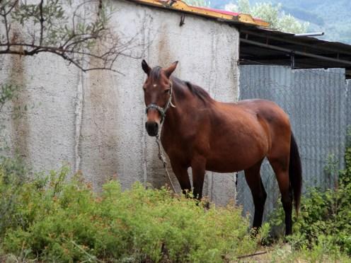 Pferd (Foto: Rüdiger Hengl)