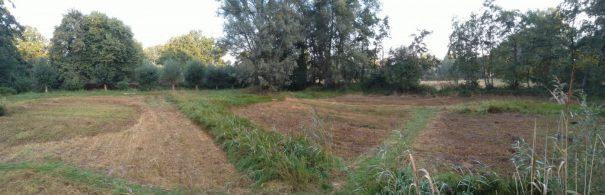 gemaaide graslandjes