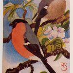 GoudvinkPyrrhula pyrrhula(Linnaeus, 1758)
