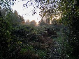 bosrand elzenbosje voor