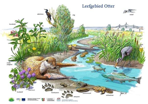 leefgebied otter tekening