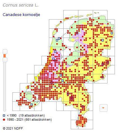 verspreiding Canadese kornoelje