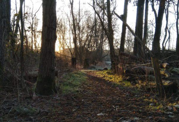 bospad bedekt met Elzenkatjes