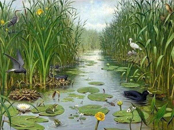 Schoolplaat 'Naardermeer' van M.A. Koekkoek