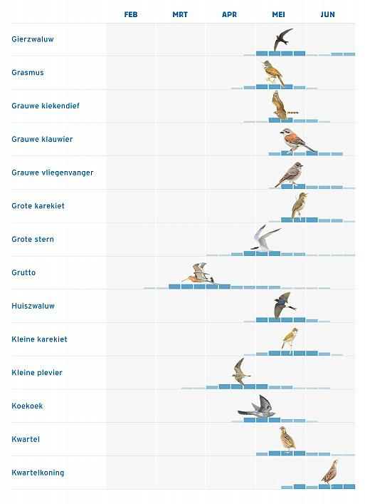 fenologie vogels 2