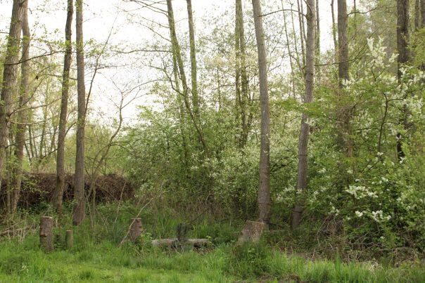 doorsteek tussen bosjes wordt zichtbaar