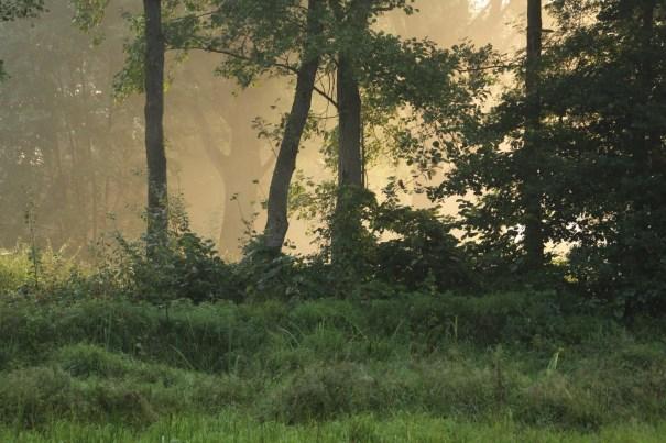zon door nevel en tussen bomen