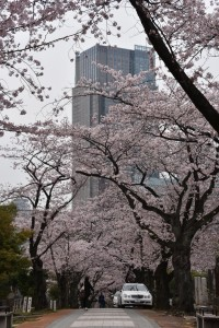 Midtown Tower is 248.1 meters (814 ft), tallest building in Tokyo!