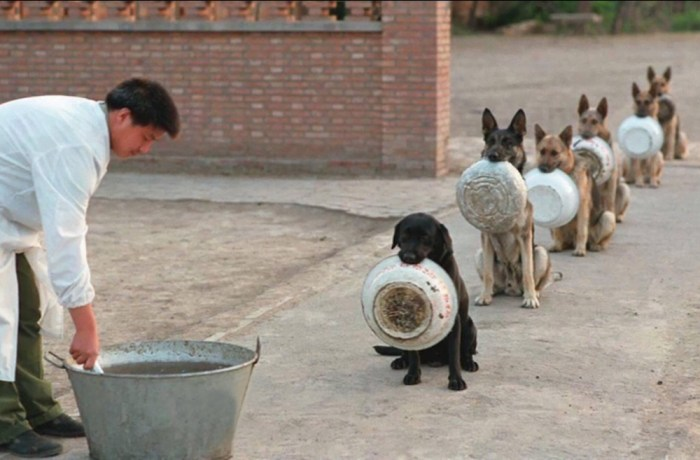 http://www.laughspark.com/police-dogs-waiting-for-dinner-15716