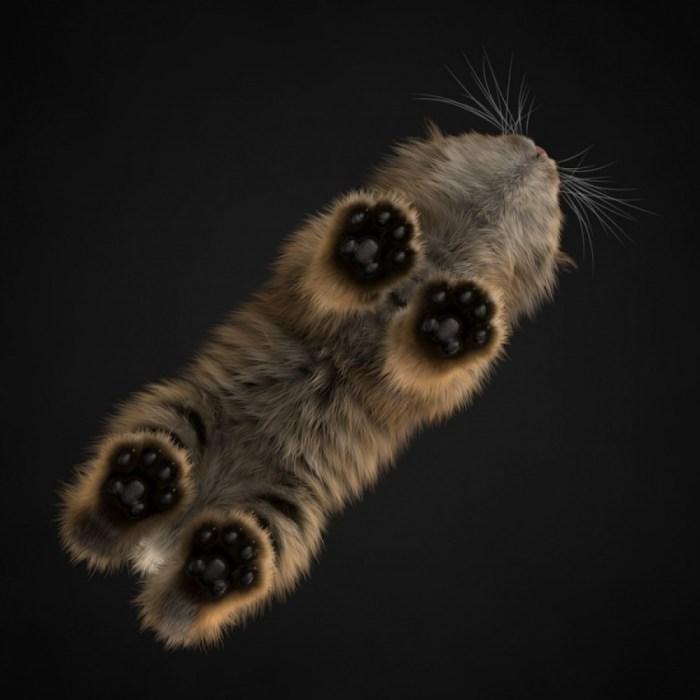 http://www.cat-tube.ru/kot-vid-snizu-2