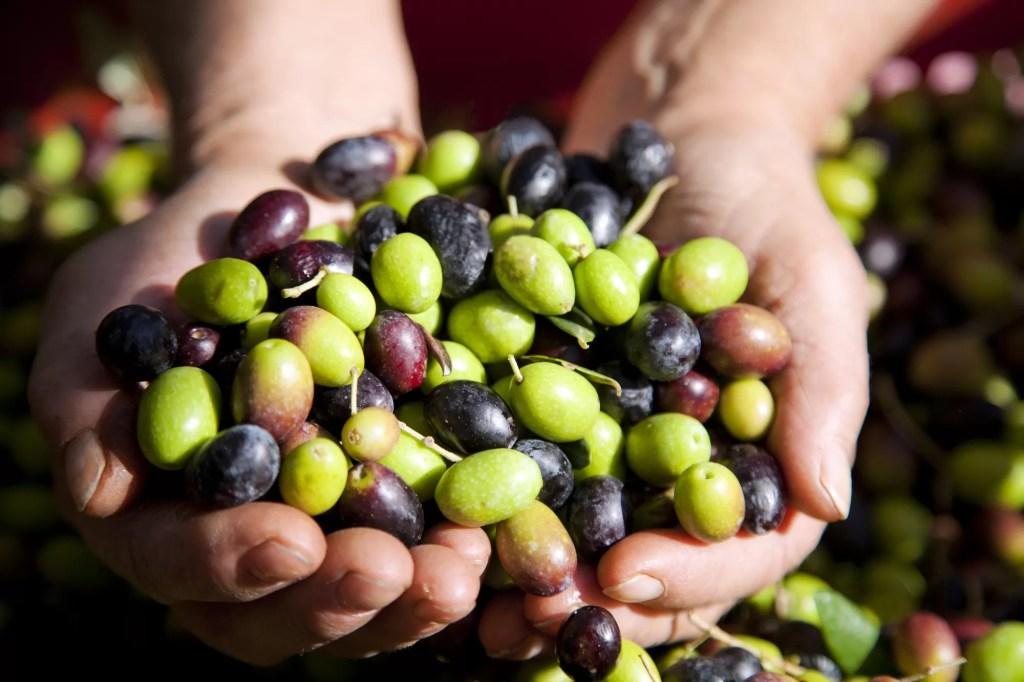 l'olio extravergine d'oliva Veneto D.O.P.