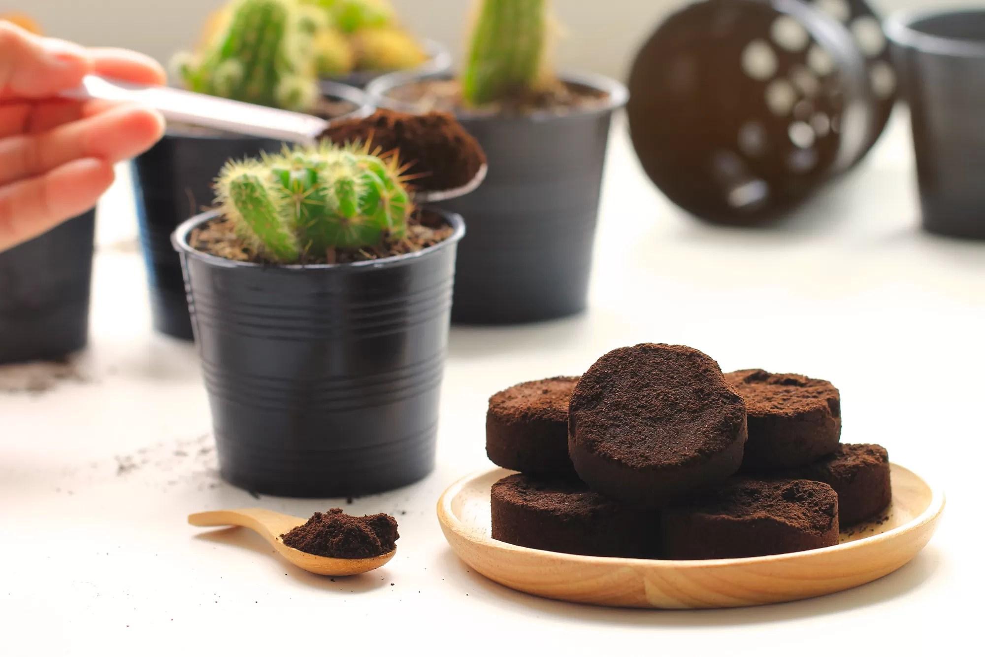 Coltivare Lamponi In Vaso fondi di caffè: come utilizzarli per un giardino fiorito