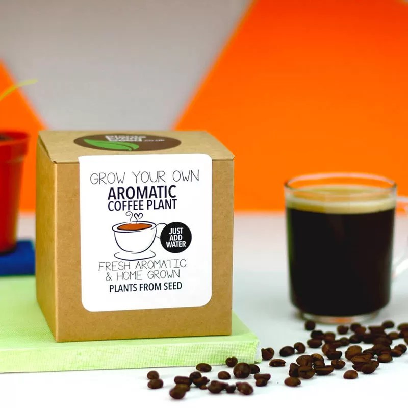 Natale 2017 - Idee regalo per amanti del caffè - Grow your own aromatic coffee plant - Kit pianta
