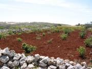kestane rengi bozkır toprağı ile ilgili görsel sonucu