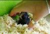 hamster oppakken