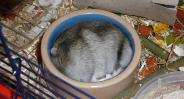 hamster ligt in koel schoteltje, verzorging tijdens warme dagen