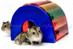 Russische Dwerghamstertjes in kunststof hamsterhuisje