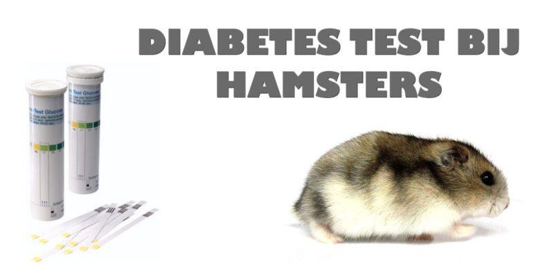 diabetes bij dwerghamsters