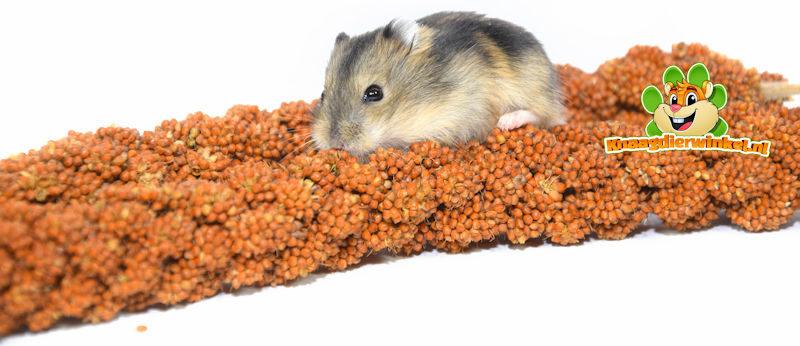 trosgierst voor hamstertjes snacks