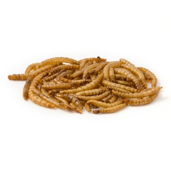 gedroogde-meelworm