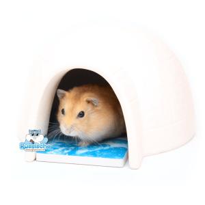 iglo huis met koelsteen en dwerghamster