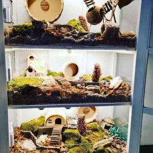 foto van hamsterkast als hamsterverblijf