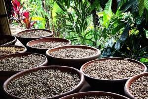 Wisata Desa Penglipuran Kombinasi Hot Spring - Agro Wisata
