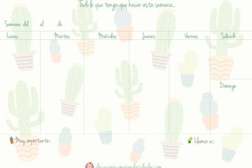 planning cactus