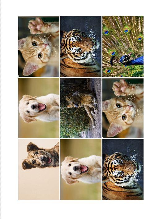 Como imprimir varias fotos por hoja Photoscape